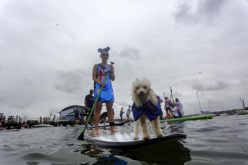 Pic of dog and stand up paddle board race.