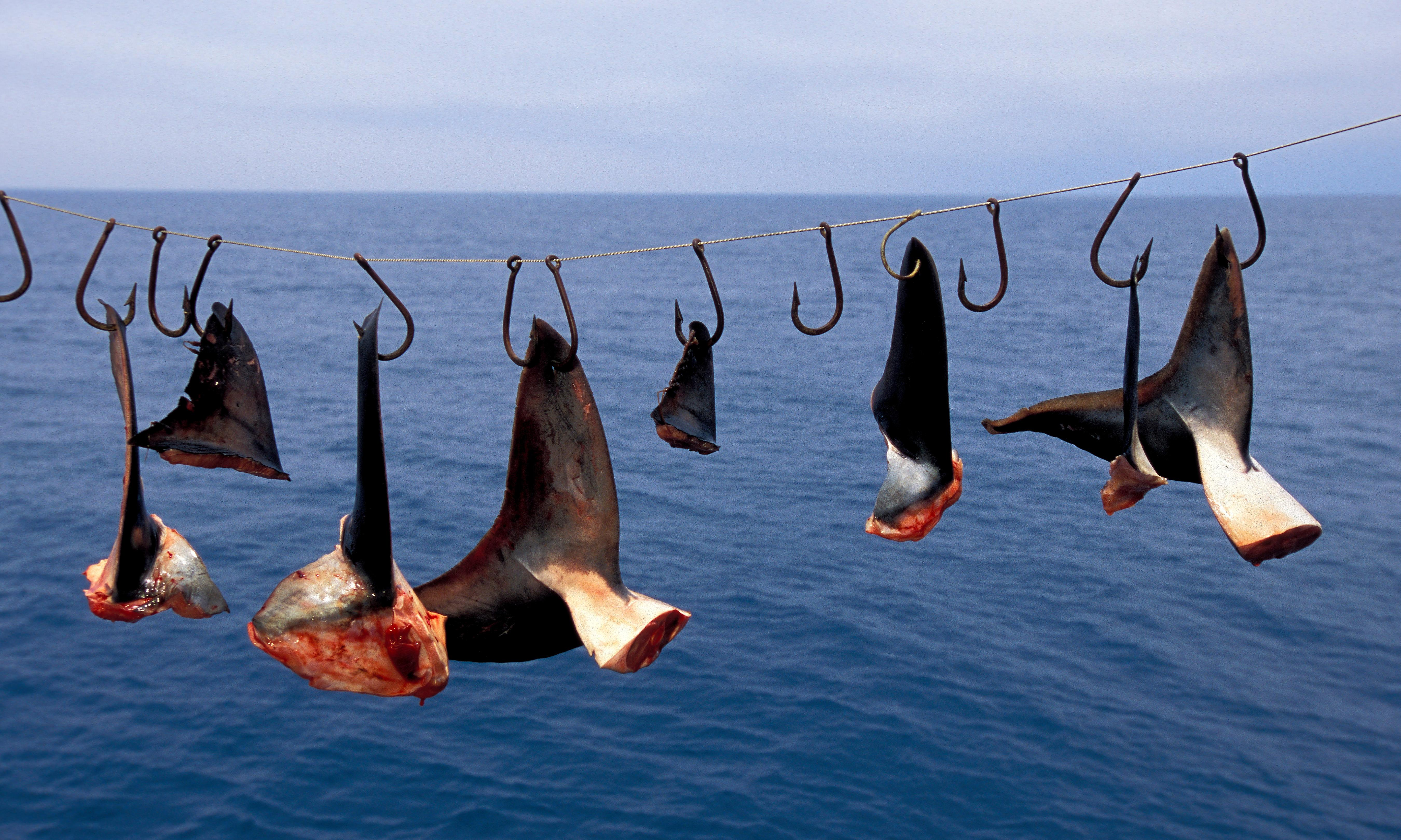Canada becomes first G7 country to ban shark fin imports
