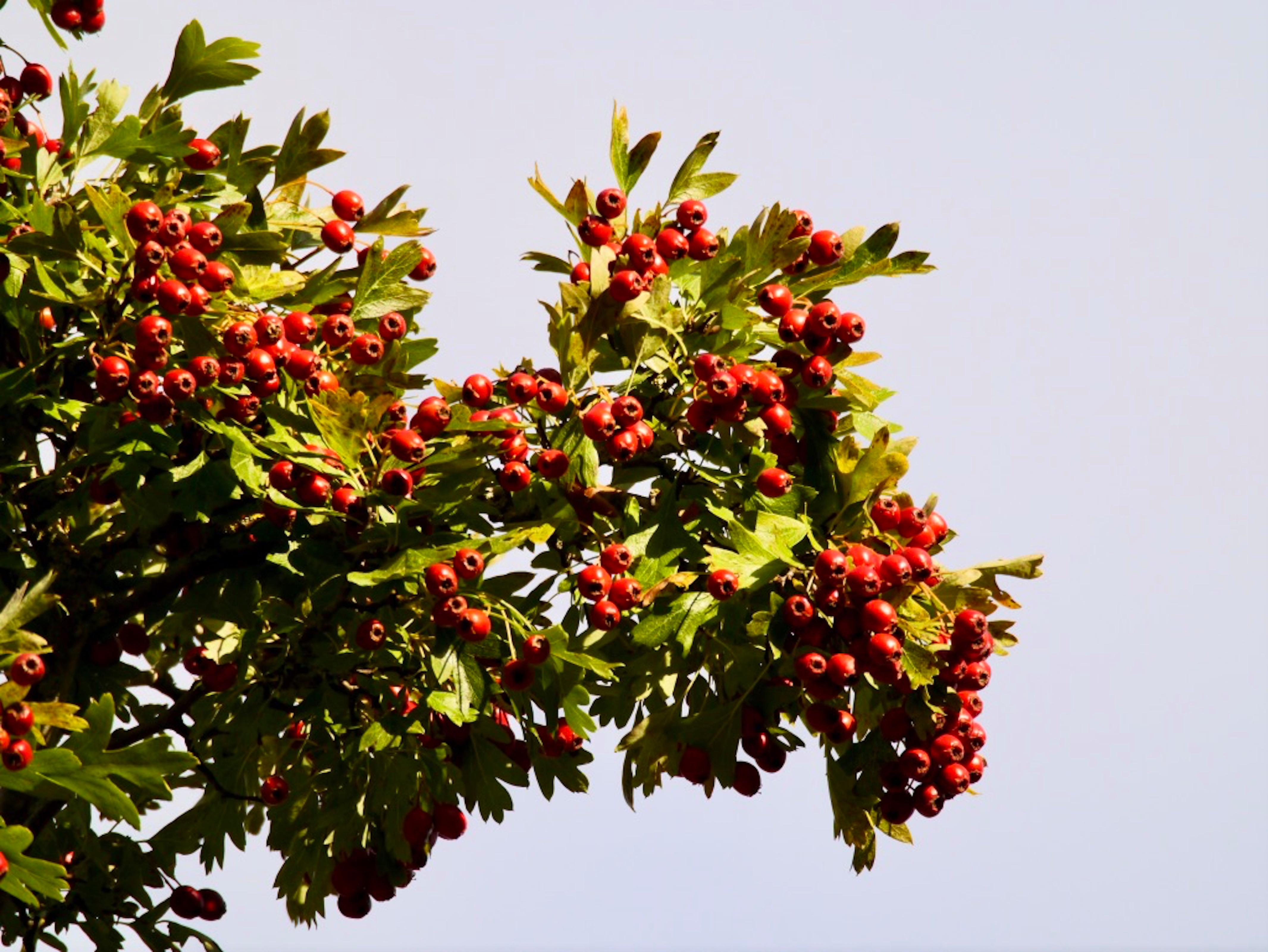 Country diary: the hedgerows are transformed, as if by magic