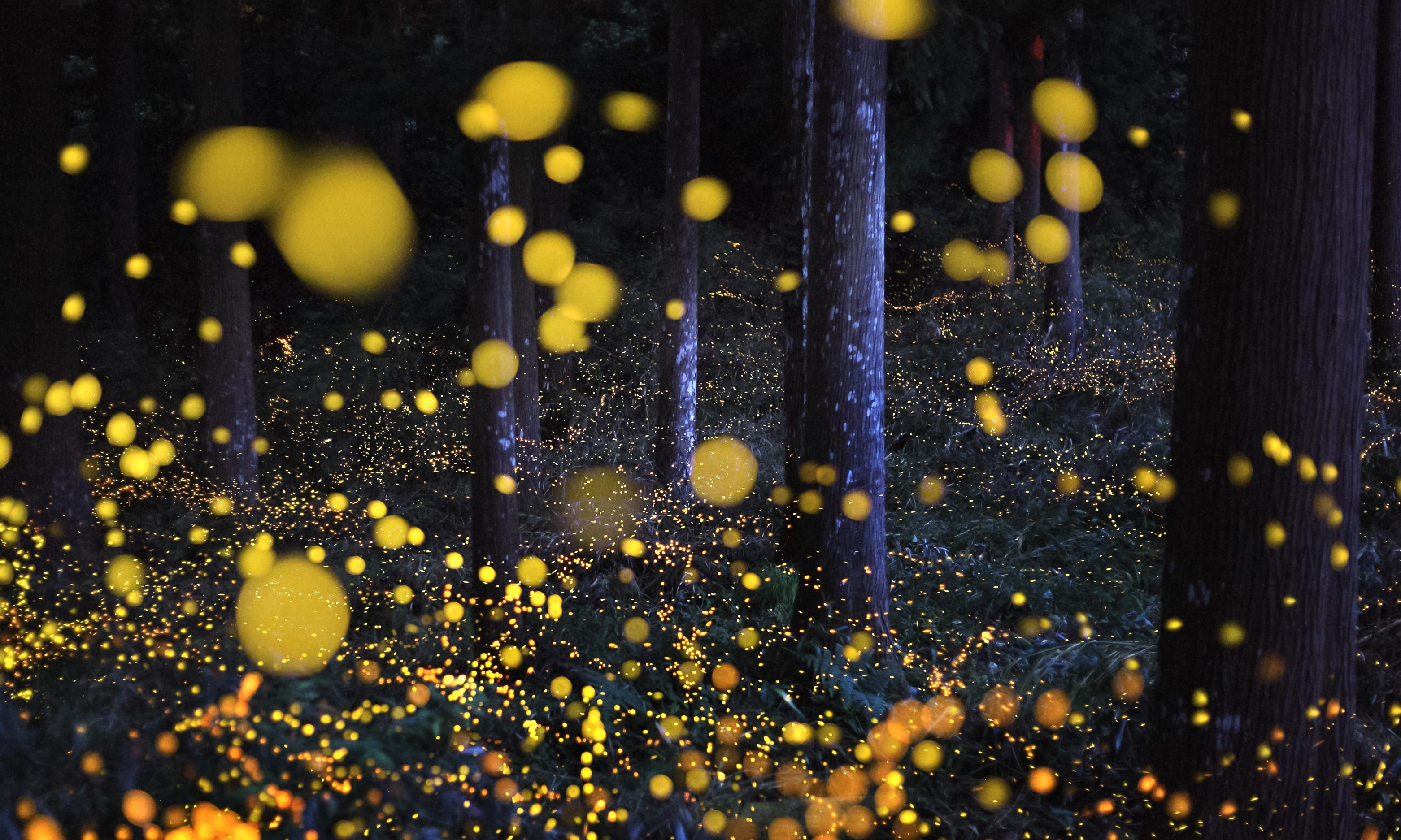 Why the lights are going out for fireflies
