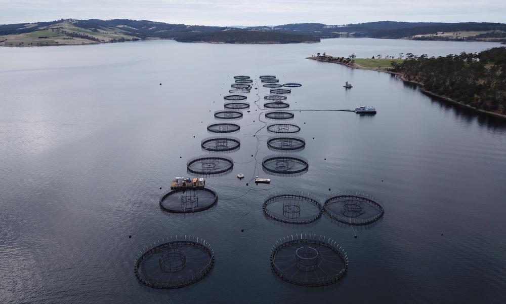Salmon ponds off Bruny Island in Tasmania.