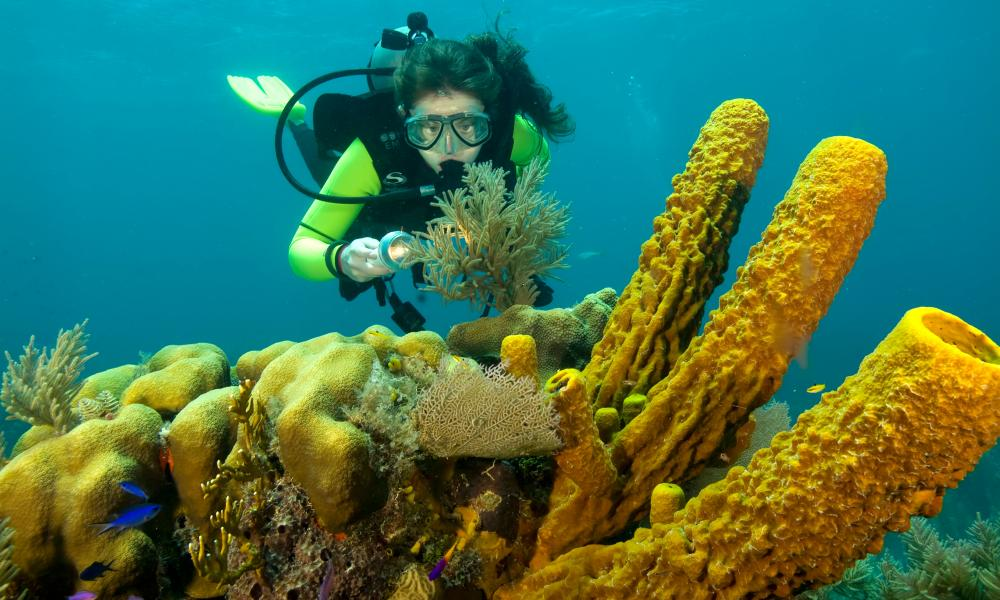 Female diver on coral reef in belize