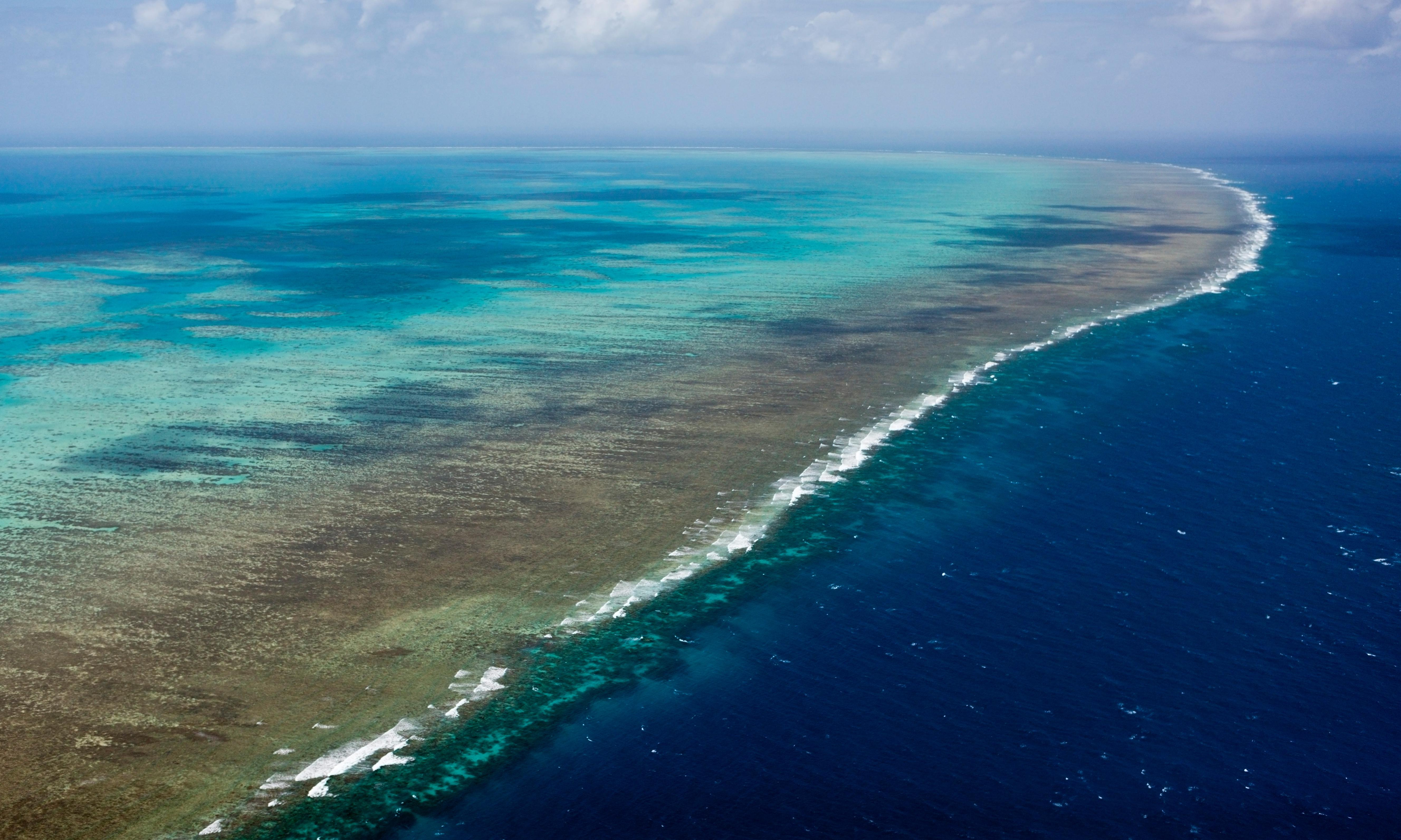 Great Barrier Reef: scientists find high levels of pesticides and blast chemical regulator