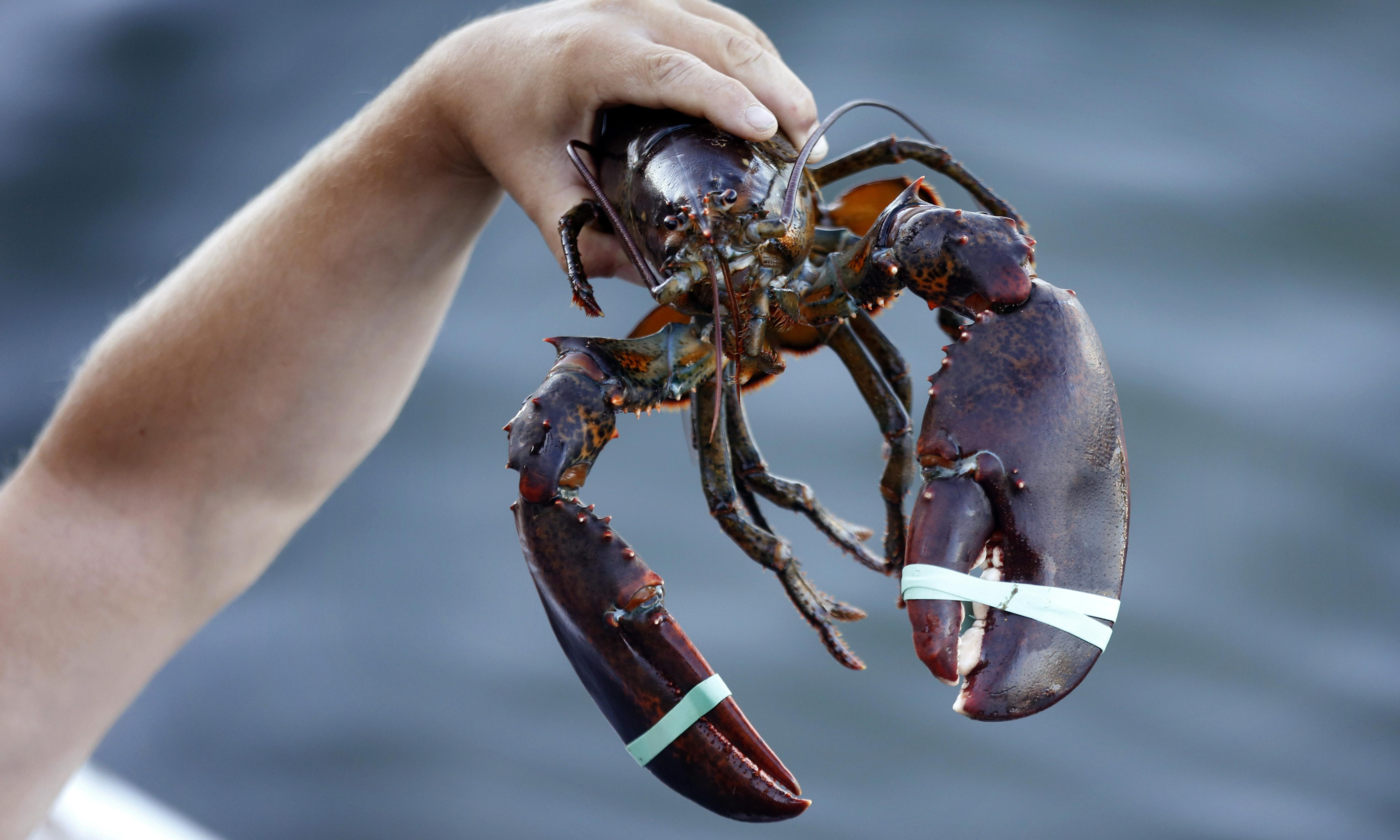 Trump's trade war with China creates unexpected winner: Canada's lobster industry