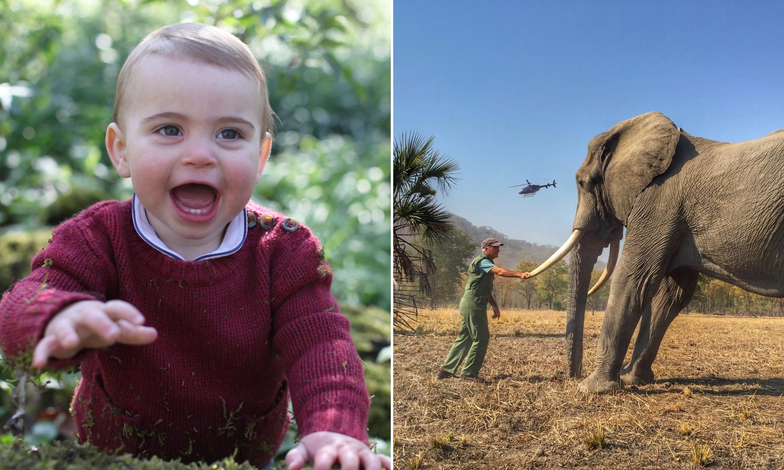 Prince Harry v the Duchess of Cambridge: who is the better photographer?