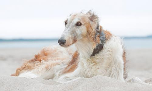 Most Popular And Unusual Australian Dog Names And Breeds Revealed