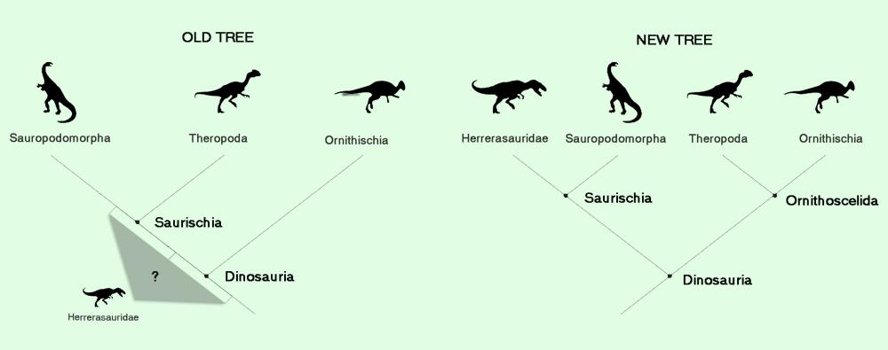 A fundamental shift in dinosaur relationships has been proposed with the new version (right) suggesting a different evolutionary history to the standard one (left)