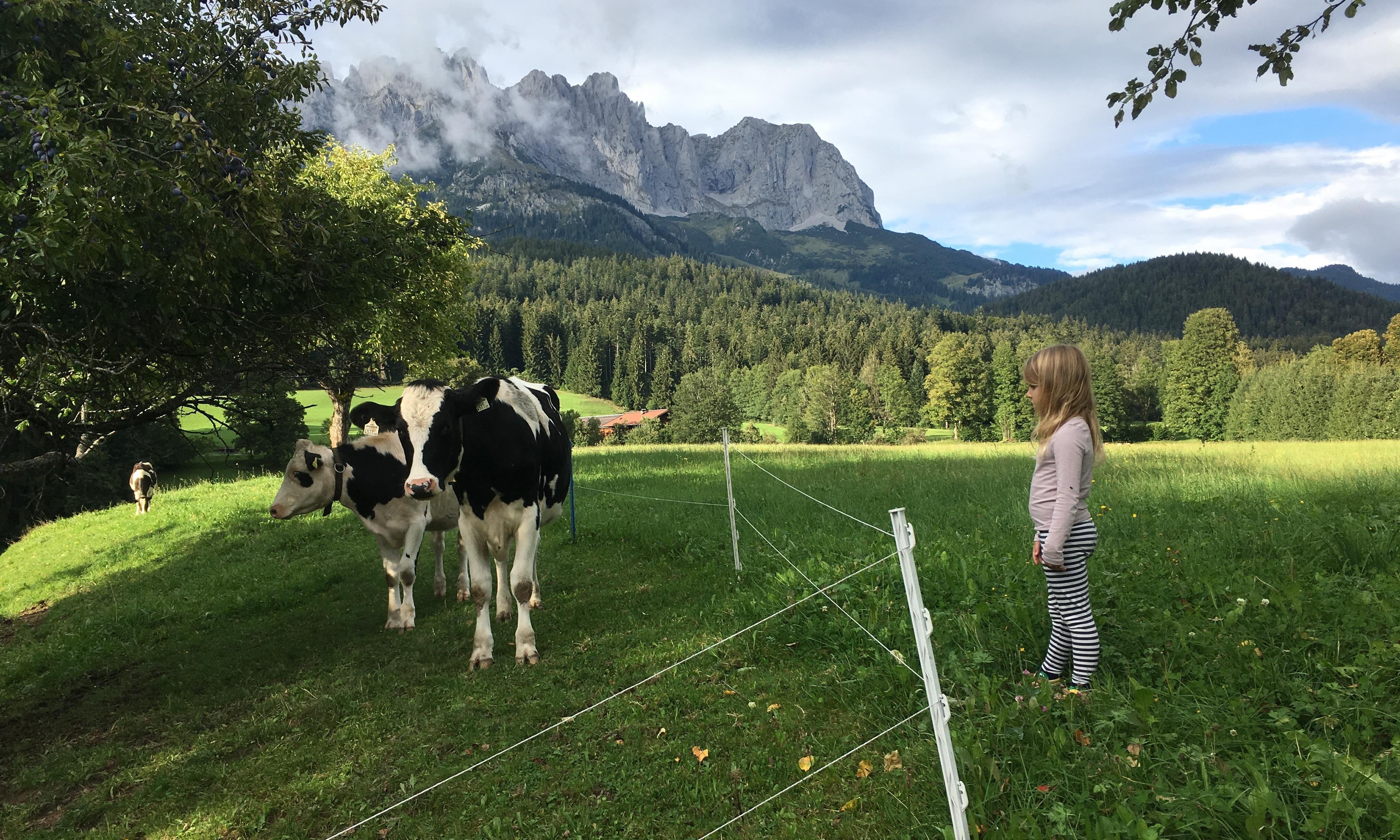 Pastures new: a family farmstay in Austrian Tirol